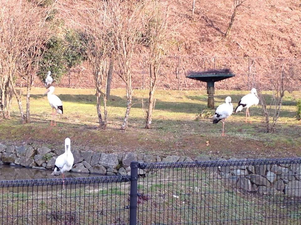豊岡のコウノトリが国境越えて韓国に飛来。これってすごいことです!