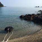 8月末まで佐津海水浴場にクラゲは出ませんでした!