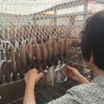 底引き網漁5月31日の終了が近づくと香住の食卓はこうなる