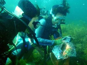 ダイバー海底清掃