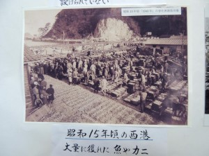 松葉ガニの並ぶ戦前の香住漁港