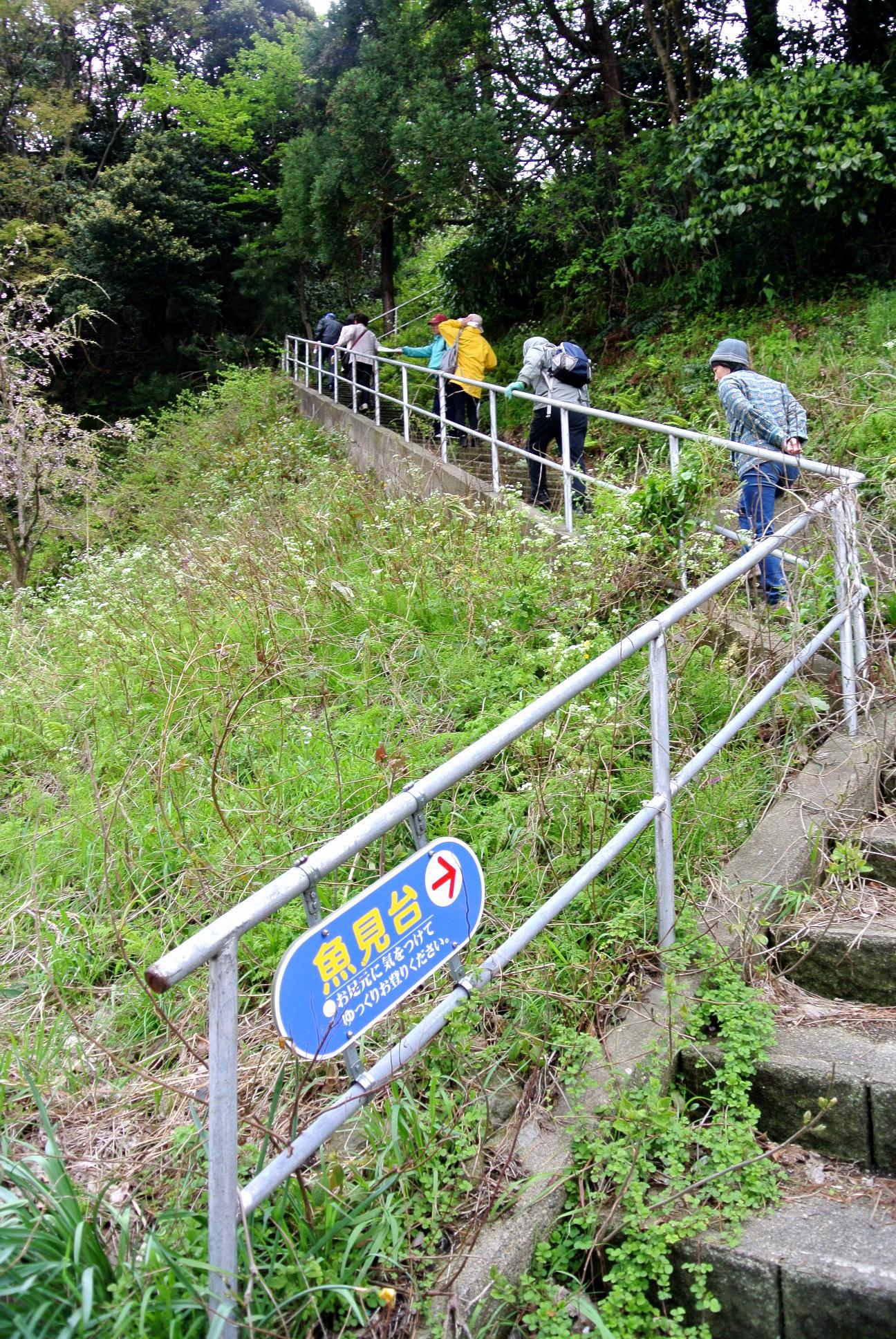 クイズ「佐津浜から魚見台に登る階段の数は?」