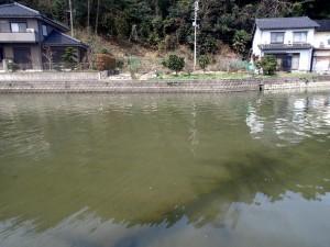 家のすぐ横の川