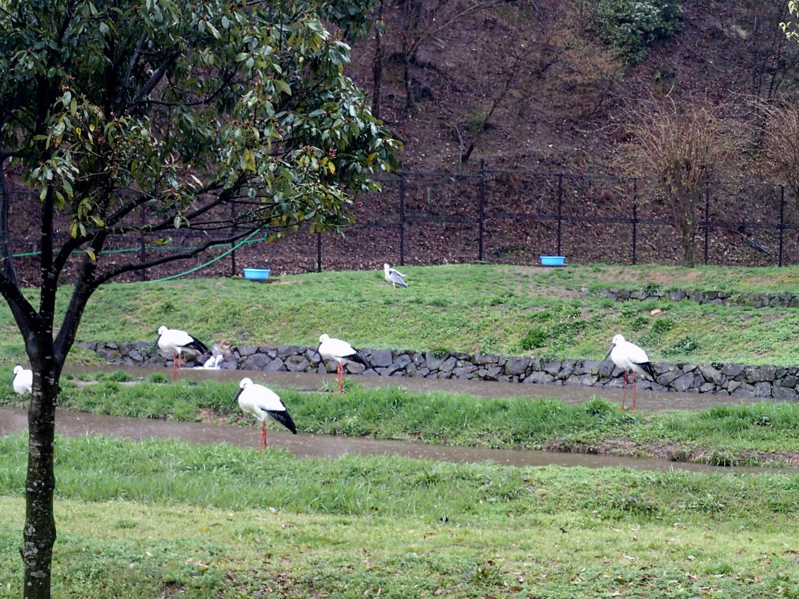 豊岡市立コウノトリ文化館(但馬☆雨の日の観光スポット2)