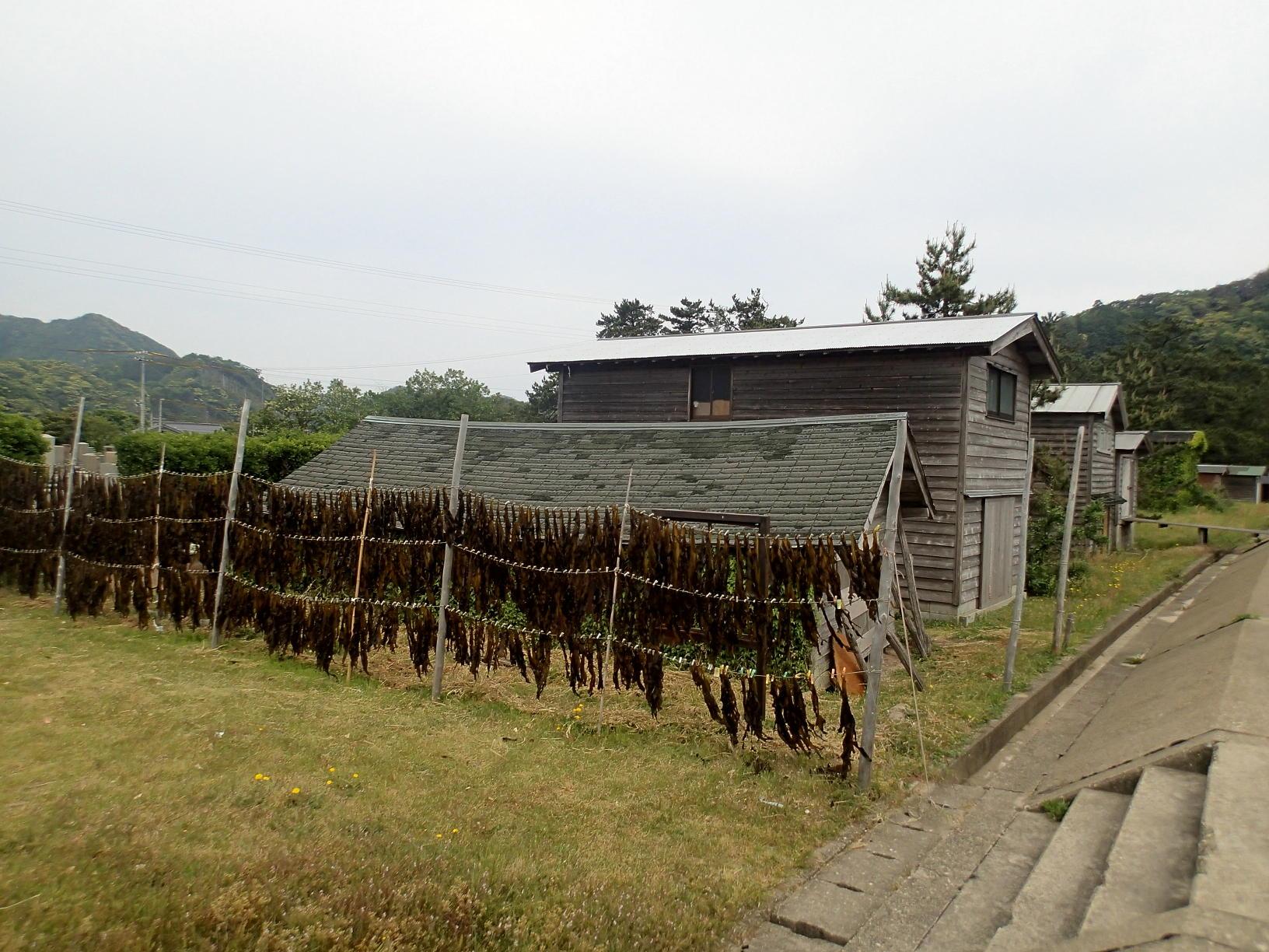 日本海にしかない船小屋、意外な使われ方の変遷~香住・佐津海岸