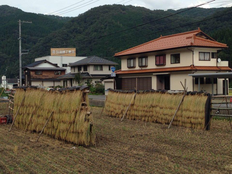 但馬のお米の話「稲木での天日干し!」~俺たちの武勇田(小代)