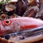 香住は夏の3ヶ月間のみ海産物がガラッと変わります!!