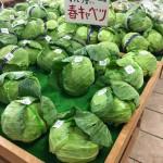 道の駅神鍋高原で春キャベツを買おう!☆6/28「キャベツまつり」もあります