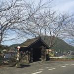 香住にあるトトロに出てきそうなバス停は4月になると桜でいっぱい