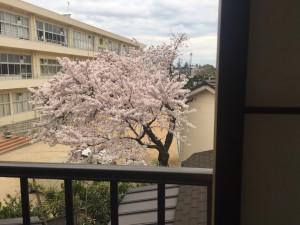 浜しおんからみた桜