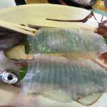 今年の城崎オンパク「イカ食べ比べ講座」は更に進化していた!