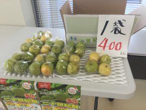 香住の二十世紀梨