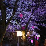 一の湯から木屋町小路経由鴻の湯まで。城崎温泉に夜桜を見に行ってきました!!