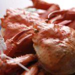 紅ズワイガニに対する安モノ、美味しくないって偏見をお持ちの方、まだ多いですか?