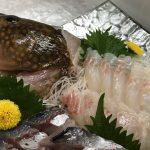 夏の魚といえばキジハタ☆関西ではアコウ、山陰ではワカミズ、アカミズ