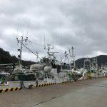 柴山港の水揚げは例年より1日早く、昨日3月20日に終了しました!!