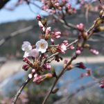 背景がどこ、って言える風景って魅力的だと思うんです~「桜と海」で思ったこと