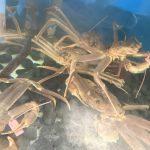 3月20日から4月4日までの松葉蟹プランに対する予約及びキャンセルはご注意下さい