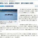 今時期の日本海はイカを追っかけてイルカがやってきます