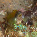 佐津海水浴場の磯観察でぜひヒラワツナギソウというレインボーな海藻に注目してみて下さい!