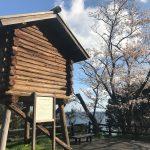 佐津海岸「魚見台」の桜の見頃は例年より早く3月20日〜25日頃!?
