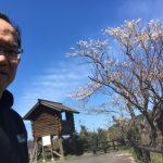桜は散り際が美しい☆昨日の香住「海と桜」佐津魚見台の様子