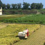 今週からお米は新米「かにひかり」になります!〜田舎の稲刈りは週末が多い