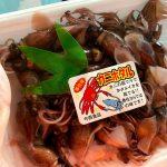 漁獲日本一、香住・浜坂ともに今年もホタルイカ漁好調です♪