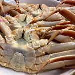 本日が松葉ガニ最終漁の日ですが、今年は本日3月20日が最終競りの日になります!