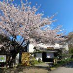 香住・大乗寺(応挙寺)の桜が満開です