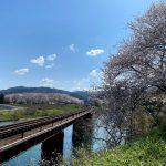 桜と列車を一緒に撮影するのに大人気な香住の矢田川橋りょう