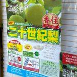 本日より香住の二十世紀梨、本日よりJAたじま香住支店より直売会があります!