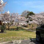 香住区余部御崎にある余部埼灯台(御崎灯台)の桜を観に行って来ました!