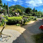 香美町香住区小原にある遍照寺(通称桔梗寺)の桔梗が見頃です♪