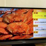 1ぱい50万円!!?香住ガニ初競りの様子がたくさん報道されました!!