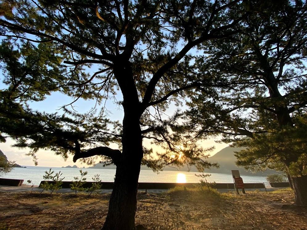 佐津海水浴場の松林